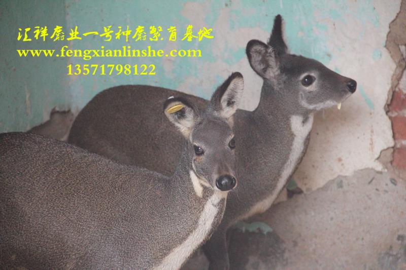 发现大量野生保护动物的照片:首次拍到大熊猫正面萌